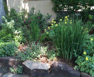 Santa Fe Vacation Rental Front Garden